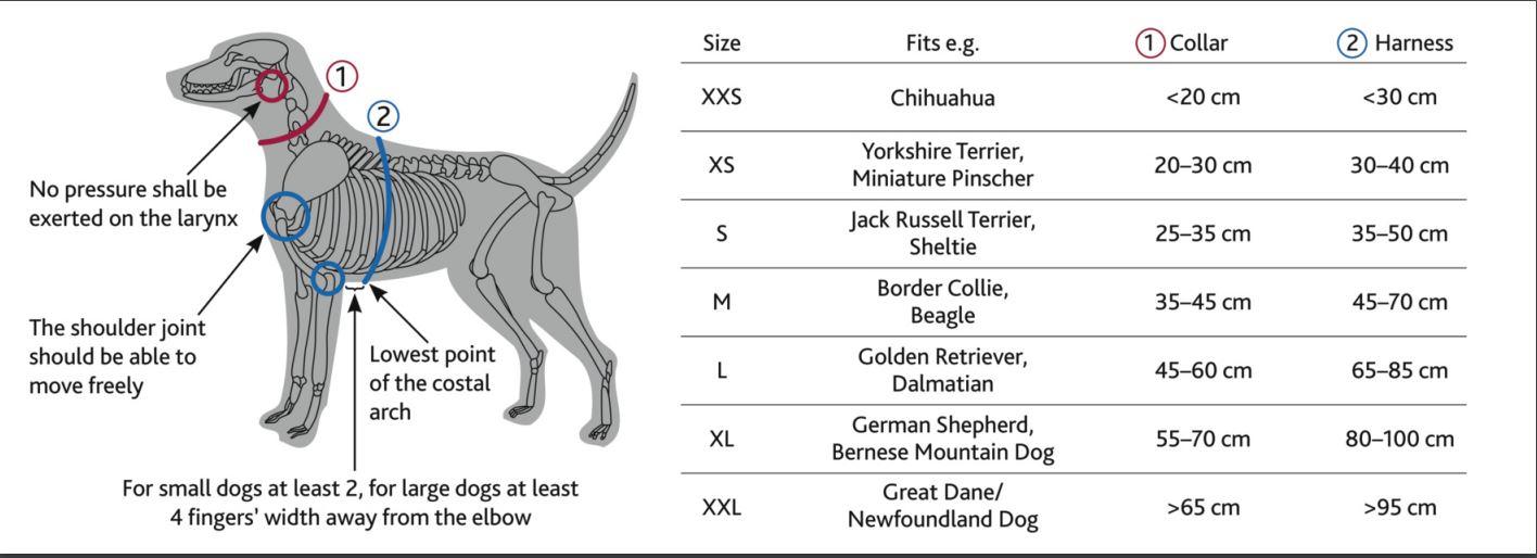 Premium Y-sele hund